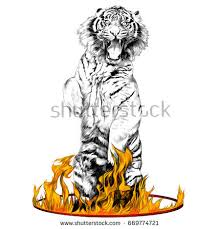 tiger fulllength on hind legs circus stock vector 669774724