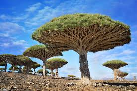 20 strange and beautiful trees from across the world