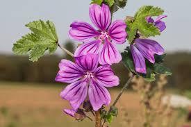 blüten pflanzenwelt stock fotos und creative bilder kostenlos