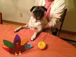 go pug yourself the belated thanksgiving post