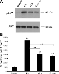 role for pakt in rat urinary bladder with cyclophosphamide cyp