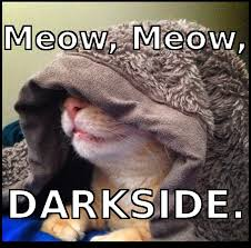 simple casino cat darkside meme
