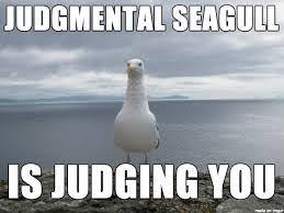 Finding Nemo Seagulls Meme - seagull meme google search seagulls pinterest meme