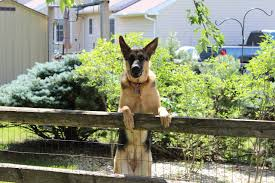 best invisible fence for german shepherd dog fence reviews
