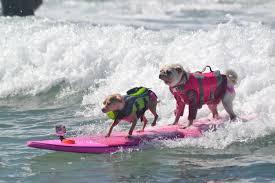 thanksgiving surf dog surfing competition san diego 2017 helen woodward animal center