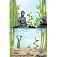 aquarium fishtank tetra background poster buddha bambo tetra