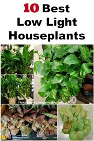 best low light house plants 10 best low light houseplants vertical jpg