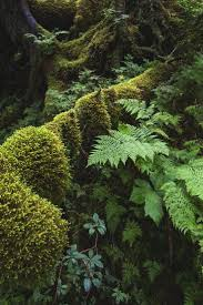 Forest Green by 2555 Best Trees And Forest Images On Pinterest Nature