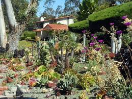 succulent garden designs pictures of succulents front porch ideas