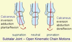 Subtalar Joint Fracture Subtalar Joint Morphopedics