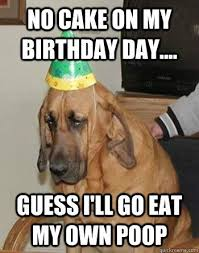 Sad Dog Meme - fancy sad dog meme sad birthday cat memes kayak wallpaper