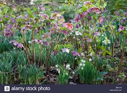 sherborne garden litton somerset southwell early spring
