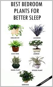 benefits of houseplants insomnia benefits of bergamot be sure to check out this helpful