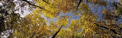 increase canopy cover by planting and maintaining trees habitat