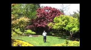 trees for small garden cori u0026matt garden