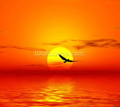 red sunset wallpaper wall mural wallsauce usa red sunset wall mural photo wallpaper