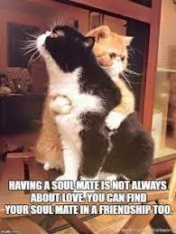 Make A Custom Meme - lil bub cat meme generator imgflip memes i ve made pinterest