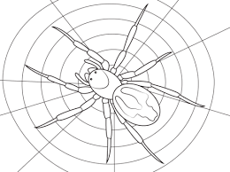 lace webbed spider coloring free printable coloring pages