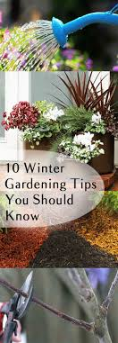 Winter Gardening Ideas 10 Winter Gardening Tips You Should Bless My Weeds