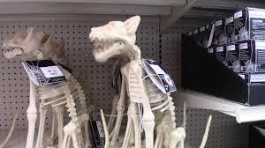animated sitting skeleton cat big lots halloween 2017 youtube