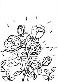 imagenes para colorear rosas dibujo para colorear e imprimir