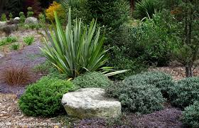 seattle native plants drought tolerant fine foliage