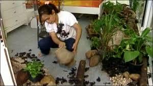 Tailandesa convive com escorpiões durante 33 dias