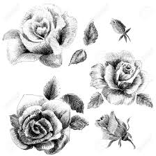 flower sketch set hand drawing stock photo picture and royalty