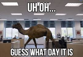 Camel Memes - camel meme uh oh guess what day it is 2 picsmine