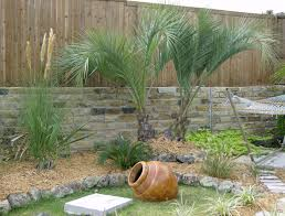 north texas palms u0026 pottery specializing in cold hardy palm trees