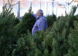 christmas tree growers battle popularity of plastic u2013 las vegas