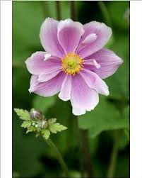 cheap herbaceous ornamentals find herbaceous ornamentals deals on