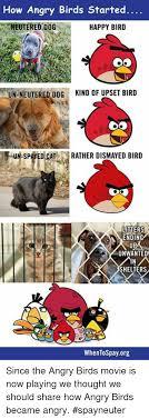 Angry Birds Memes - how angry birds started neutered dog happy bird un neutered dog kind