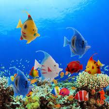 Buy Ornamental Fish 5pcs Plastic Artificial Floating Swimming Vivi Fish Aquarium Fish