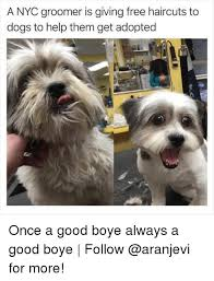 Meme Nyc - a nyc groomer is giving free haircuts to dogs to help them get