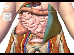 Google Body Anatomy Google Earth For The Human Body Youtube