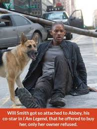 german shepherd and will smith from i am legend german