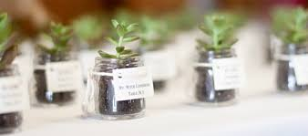 plant wedding favors amazing plants for wedding favors wedding plants for wedding