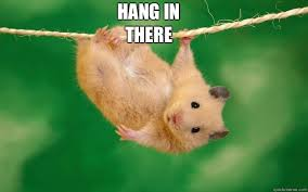 Hang In There Meme - hang in there misc quickmeme