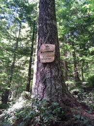 Opal Creek Oregon Map Opal Creek Wilderness U2013 Nasty Rock Trail 3356 Hiking Throughout