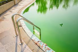 the war against pool algae and how to enlist swimming pools in