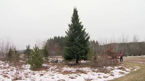 17 Foot Christmas Tree