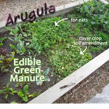 warm garden cover crop beautiful ideas prepare your vegetable
