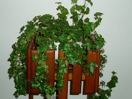 decorate your interior u2013 the easiest indoor plants to grow in your