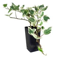 buy cheap plants online sydney melbourne brisbane adelaide