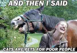 Meme Horse - smug horse meme weknowmemes