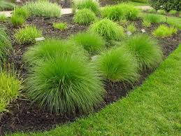 types of ornamental grasses plant bed drought tolerant and perennials