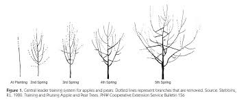 aces publications fruit culture in alabama and pruning