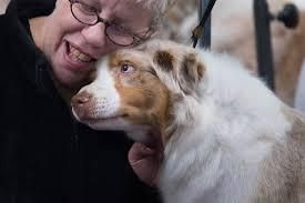 australian shepherd uk best in show who will win westminster kennel club dog show 2014