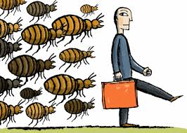 Do Bed Bugs Jump From Person To Person Bedbugs How Contagious Are They Really